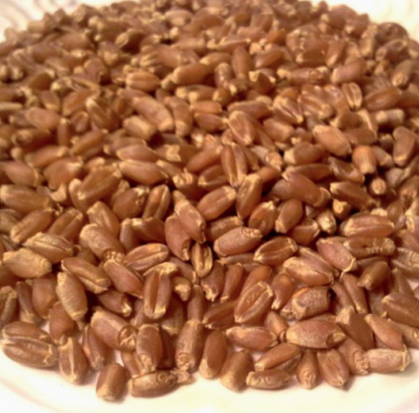 Grains: Wheat Berries, 1lb