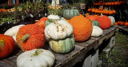 Exotic Pumpkins perfect for stacking!