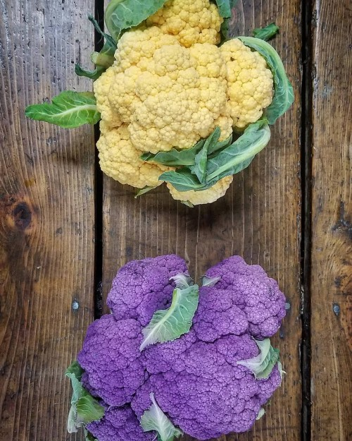 The colors of fall! Purple & Cheddar Cauliflower