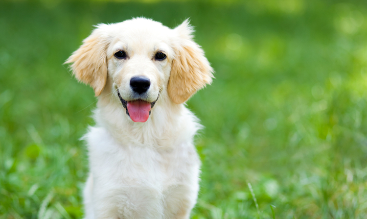 Dog Creek Pet Supply