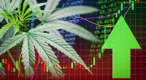 Organigram stock soars 35% after earnings and boosts broader cannabis sector