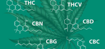 The global cannabinoid pharmaceutical industry