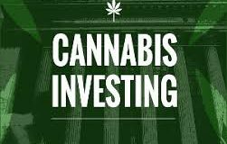 Cannabis Is Looking More Like a Defensive Category