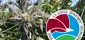 DEA FINALLY ANNOUNCE RULES TO EXPAND SUPPLY OF RESEARCH WEED