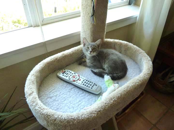 Tiki the cat