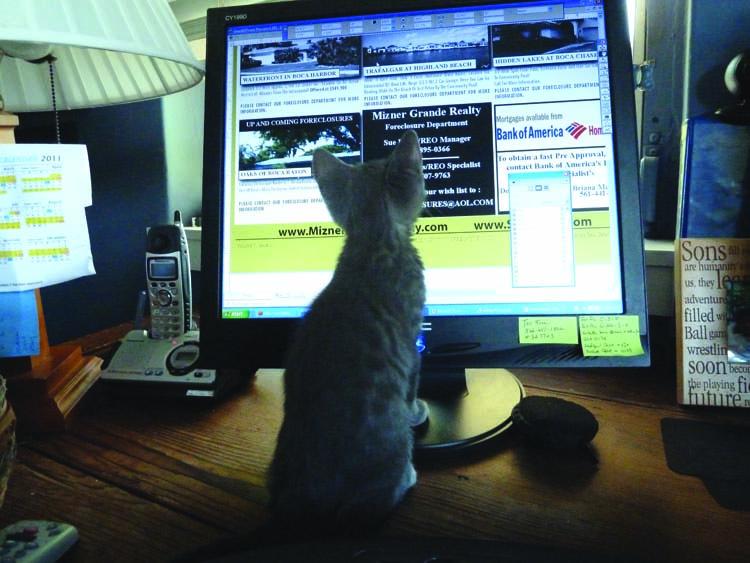 Baby Tiki looking at the screen