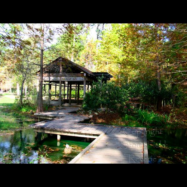 Mercer Arboretum