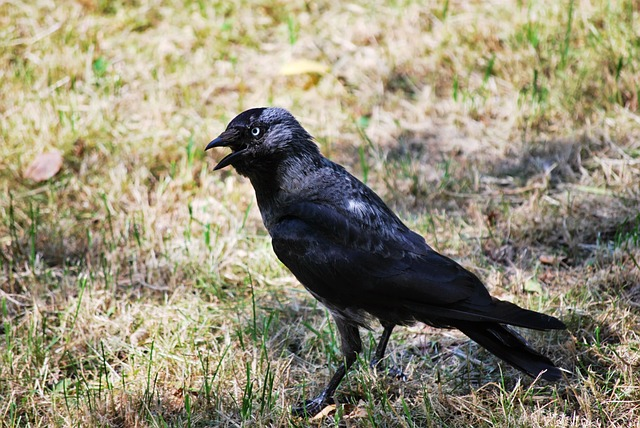 ShadowTrader Video 02.21.16 – Will Peter have to eat crow after last weeks call?