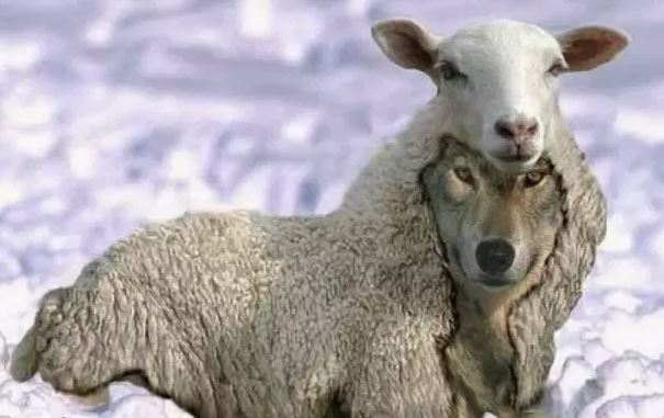 ShadowTrader Video Weekly 09.02.18 – A wolf in sheep's clothing