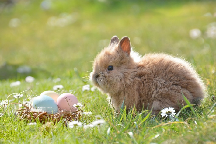 ShadowTrader FX Trader 04.22.19 – Limited Trading Easter Weekend