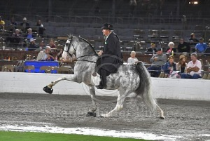 2019 TWH National Celebration - 11 Monday PM - 113 - O-A
