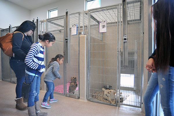 Potential adopters look at dogs in double-compartment housing