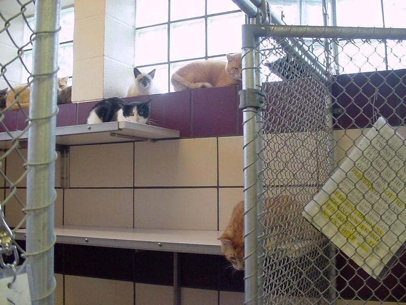 indoor pen for felines
