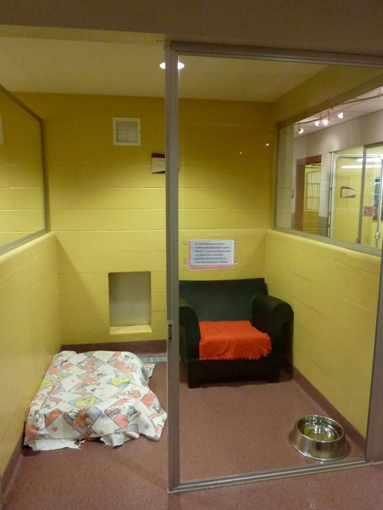 Facility Design Shelter Animal Housing And Shelter Population Management Koret Shelter Medicine Program
