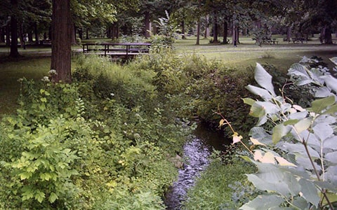 parc-angrignon-crawford-park