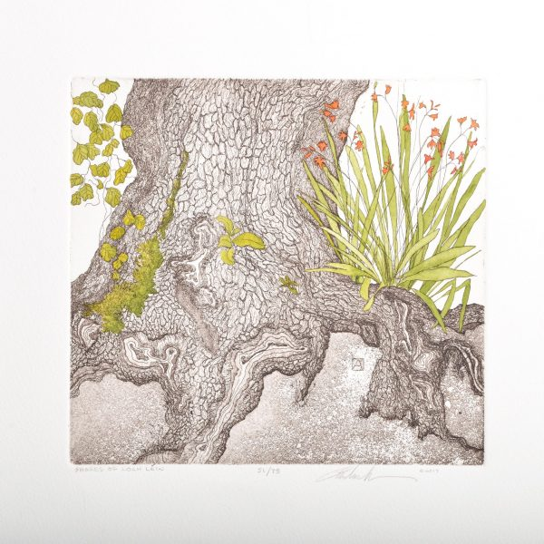 print of a tree stump with plants growing around the base, botanical etching by Andrea Wilson
