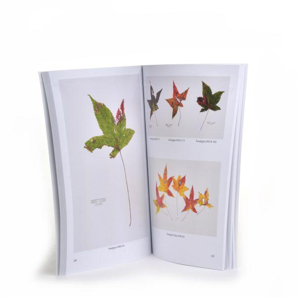 inside of book of leaves