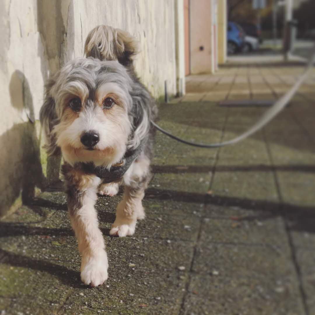 Cute dog named Pipoca