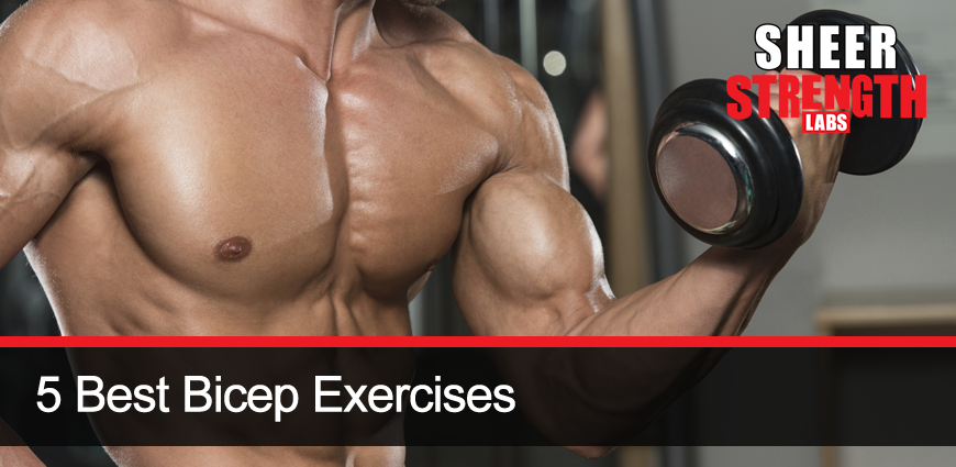 Bicep Training and How to Effectively Do It