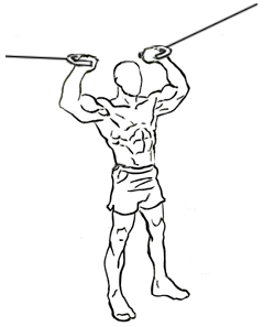 Bicep Exercises Using Double Overhead Cable Curls