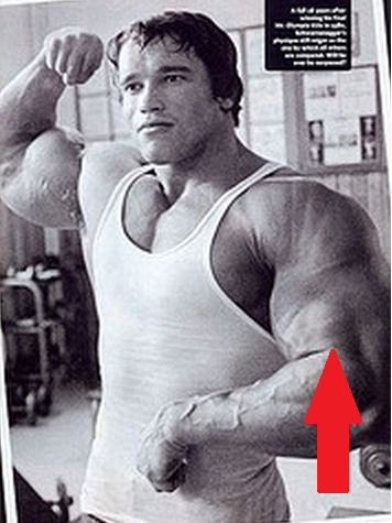 Arms Workout: Hammer Curls to Hit Brachialis With Arnold Schwarzenegger