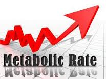 Metabolism, Losing weight, Build Muscles and Supplements: Metabolic Rate