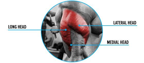 Strength Training and Strength Exercises: Triceps Muscles
