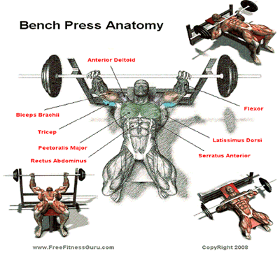 Bench Press Tips, Techniques and Variations: Bench Press Anatomy
