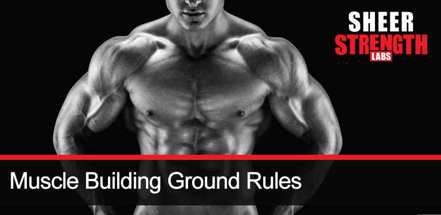 Muscle Building Tips to Get the Body You Want