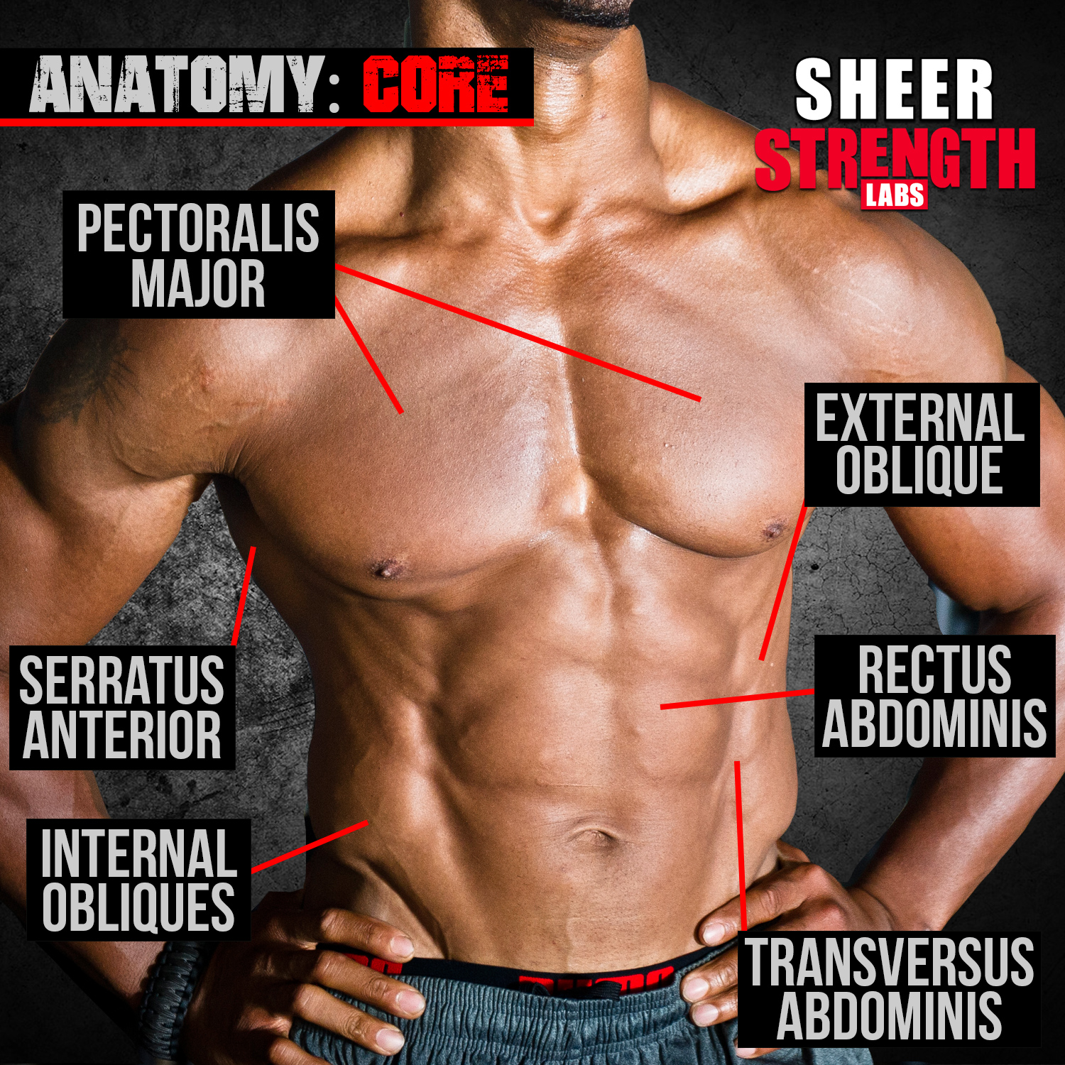 Do you know which core muscles are which?