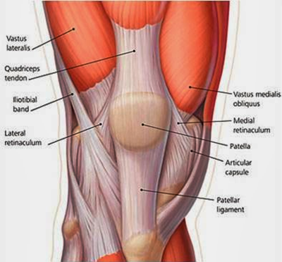 Knee Conditioning Exercises: Knee Anatomy