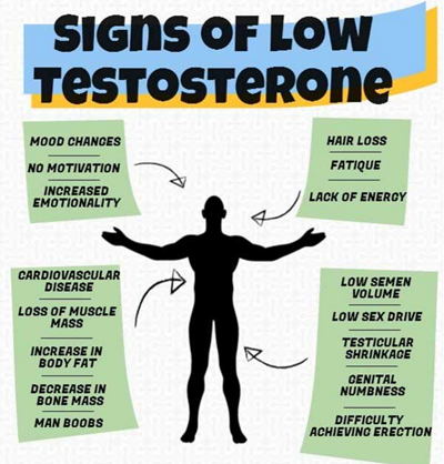 Alcohol Effects on Your Body: Increase Testosterone