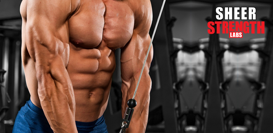 Triceps Training: Building Triceps