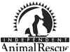 Domestic Mediumhair Cat for adoption in Durham, North Carolina - Rothko