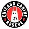 Basset Hound Mix Dog for adoption in Chicago, Illinois - Ruth