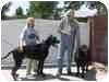 English Bulldog Puppy for adoption in San Fernando Valley, California - Jimmy Kimmel