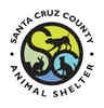 Chicken for adoption in Santa Cruz, California - A229431