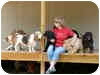 Domestic Shorthair Cat for adoption in Rock Hill, South Carolina - -cat