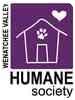 Domestic Shorthair Kitten for adoption in Wenatchee, Washington - Hera