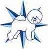 Bichon Frise Dog for adoption in Tulsa, Oklahoma - Sully - IL