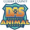 Domestic Mediumhair Cat for adoption in Naples, Florida - PORTER
