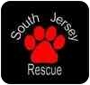 Lhasa Apso Dog for adoption in Gibbstown, New Jersey - Ollie