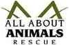 Domestic Shorthair Cat for adoption in Glendale, Arizona - Joey
