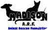 Domestic Shorthair Cat for adoption in Madison, Alabama - Ladybug