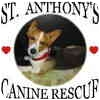 Welsh Corgi/Terrier (Unknown Type, Small) Mix Dog for adoption in Lomita, California - Lady