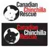 Chinchilla for adoption in Mississauga, Ontario - Marty