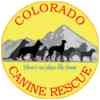 Chihuahua/Jack Russell Terrier Mix Dog for adoption in Englewood, Colorado - Meyer
