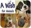 Boxer/Labrador Retriever Mix Puppy for adoption in Dana Point, California - Whitney