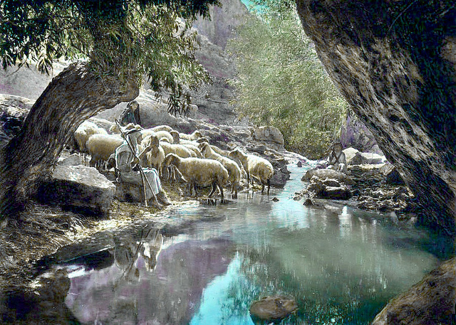 good-shepherd-near-calm-waters