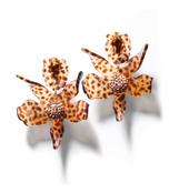tortoise 'lily' crystal earrings